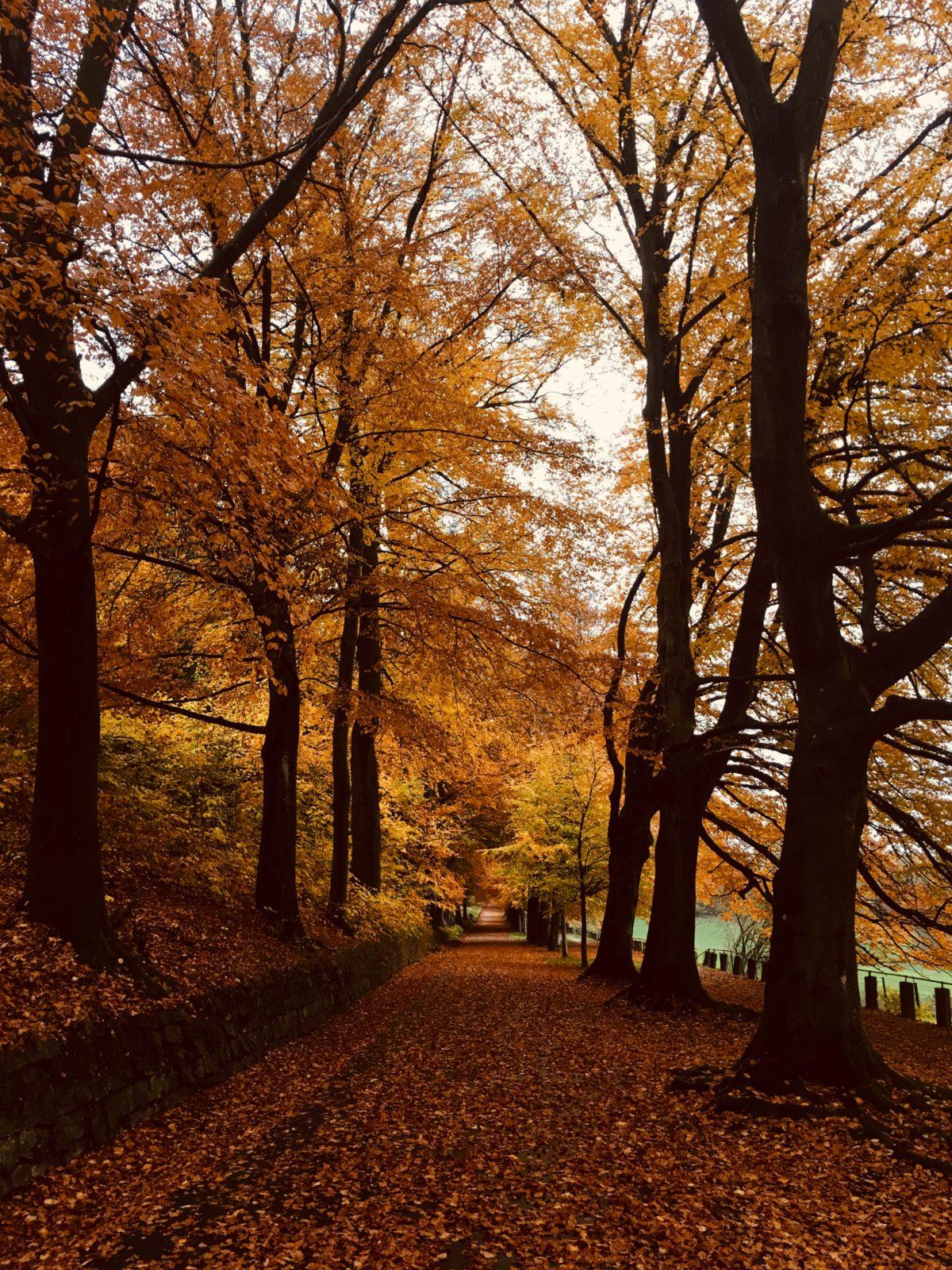 Herbstatmo auf dem Lousberg